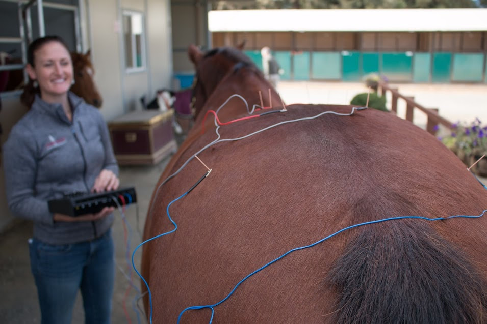 Equine Electro-Acupuncture Stimulation